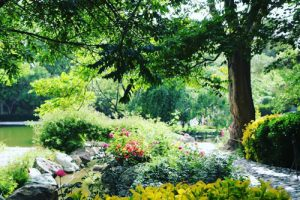 باغ گیاهان